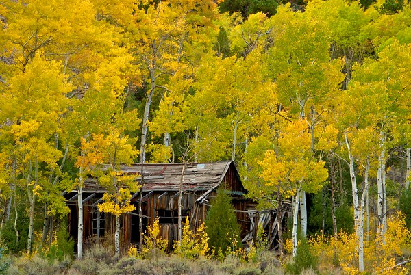The remains of a settler's cabin in Poudre Canyon, along CO-14