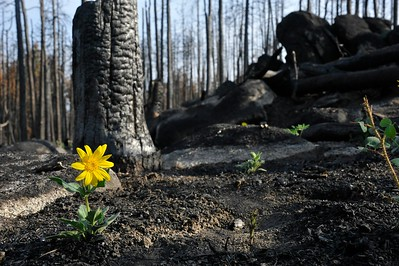 Renewal of the land in the High Park Fire burn area, September 2012.