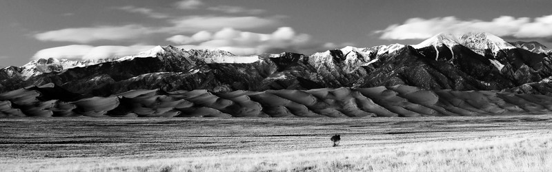 I liked this tree all by itself out in the field, with dusk's soft light on the Great Sand Dunes.  I moved around a bit to set up a composition that emphasized the tree's isolation and, if I may personify it just a bit, bravery.