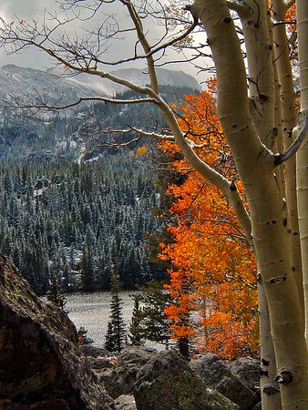Bear Lake and a red aspen tree, Rocky Mountain National Park, Colorado.  This grove seems to turn early, usually by the end of the third week of September.