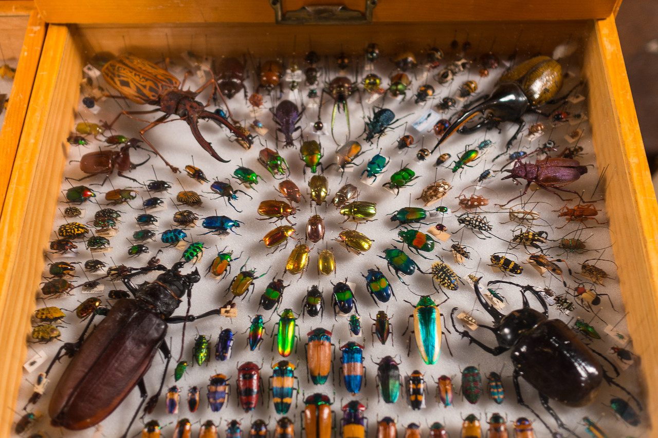 Gorgeous display of color and iridescence at the Bug Fair 2017