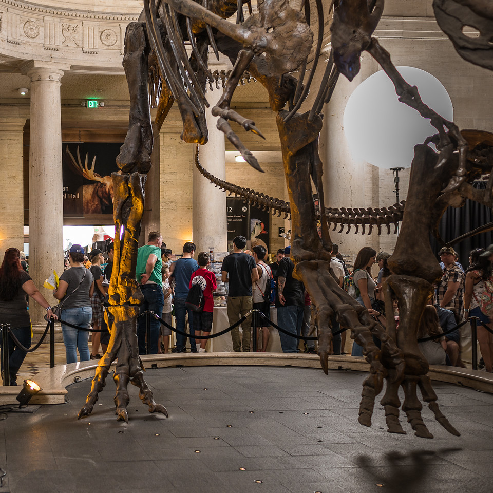 The Dinosaur Exhibit surrounded by families admiring the Bug Fair