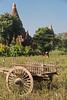 Bagan....local farming
