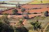Dry land crops near Pindia