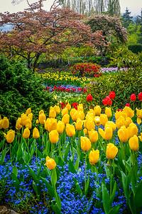 Tulips in the Sunken Garden