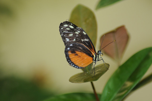 Butterflies - Boston Science Museum 2011
