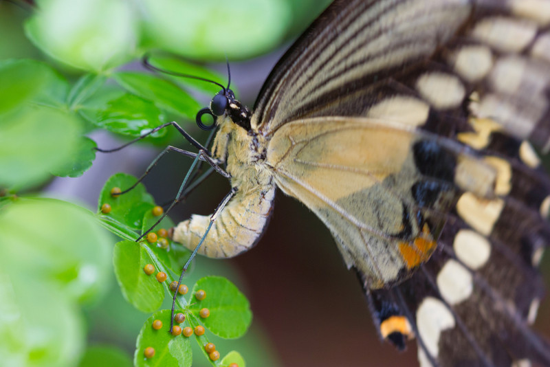 She unsloads her precious cargo onto an awaiting Green LIve Tree. Butterfly Word, Coconut Creek, Florida.