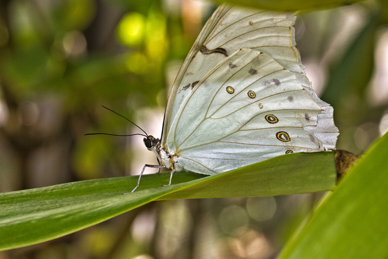 Shot at Butterfly World, Coconut Creek, Florida