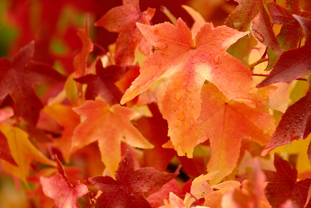 The signs of Fall Greenville