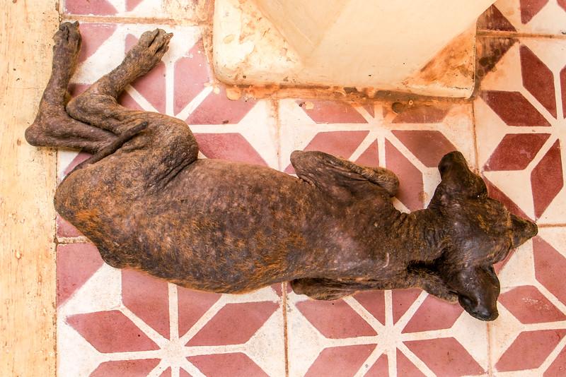 ANGKOR. DOG SLEEPING IN THE WAT ATHVEA TEMPLE (BETWEEN TONLE SAP AND SIEM REAP).