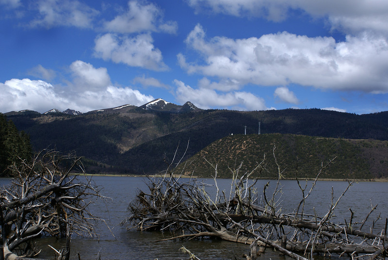 POTATSO NATIONAL PARK. LAKE WITH DEAD TREES. YUNNAN.
