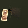 EMEI SHAN. MOUNT EMEI. HOLY MOUNTAIN. SICHUAN. A TURTLE EATS A CHINESE BANKNOTE.