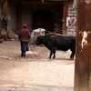 YUNNAN. VIEW AT THE COURTYARD. OLD TIBETTAN LADY WALKS WITH HER YAK. SHANGRI-LA AREA. CHINA.