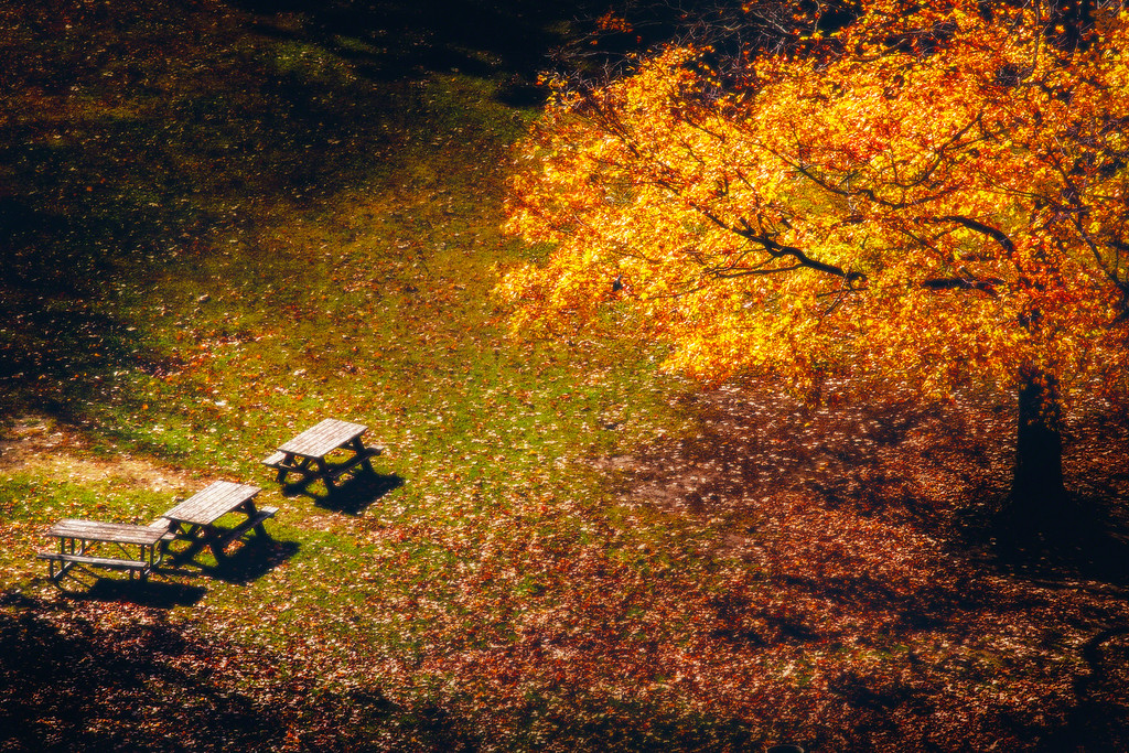 Fall On Picnic Tables