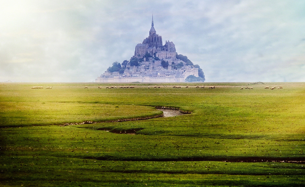 The Sheep of Mont St-Michel