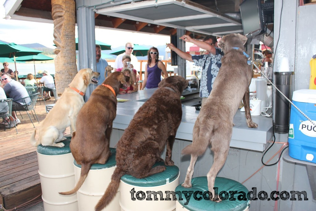 Pug Ryan's Lakeside Tiki Bar, where the dogs all know they get special treatment!