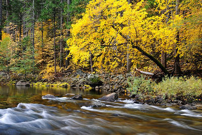 Fall colors on the Merced River Yosemite National Park