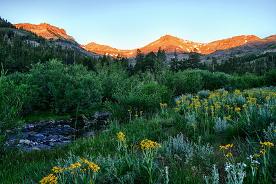 Sardine Meadow Sunrise Sonora Pass