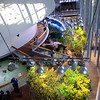 An inside view of the California Academy of Sciences