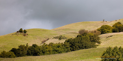 """Rolling Hills"" Location: Mission Peak Regional Preserve, Fremont, California.  Mission Peak is a popular local hike in the bay area. I was told that up to 4000 people hike this mountain over a typical weekend. Probably it is just the right balance between hike's difficulty level and it's proximity to the city makes it so popular. What I like about it is not just that it is a good exercise but also that it provides me with ample photographic opportunities. This is the view on the west side of the hill during a stormy day. The clouds had occassional breaks providing me with some awesome displays of the light on these beautiful rolling hills.  Tech Info: Lens: Canon EF 100mm f/2.8L IS Macro Camera: Canon EOS 5D Mk II Exposure: 1/400sec at f/8 and ISO 100 handheld No filters and bit of LR processing including Grad ND filters"