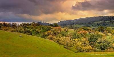 """Undulating hills and Oaks of California Landscape"" Location: Joseph D Grant County Park, California. GPS: 37°20'4"" N 121°41'56"" W  Just after the rains, when the colors were deep, air was fresh and clouds were dramatic I realized it would be difficult to catch this moment again. So I stopped and made this image by the roadside.  Tech Info: Lens: Canon EF 24-70 f/2.8L @50mm Camera: Canon EOS 5D Mk II Exposure: 0.5sec at f/13 and ISO 200 Filters: LEE ND Grads to balance the light of the sky and foreground  Note on processing: I processed this image in Adobe Lightroom 4. These days I find myself using digital graduated filters a lot. I experiment with tonal changes, color contrasts and even color temperature changes to obtain a look of the image that resembles with how I remembered this place. But essentially the processing involved exposure balancing in all areas of the image, saturation changes, and local dodging and burning."