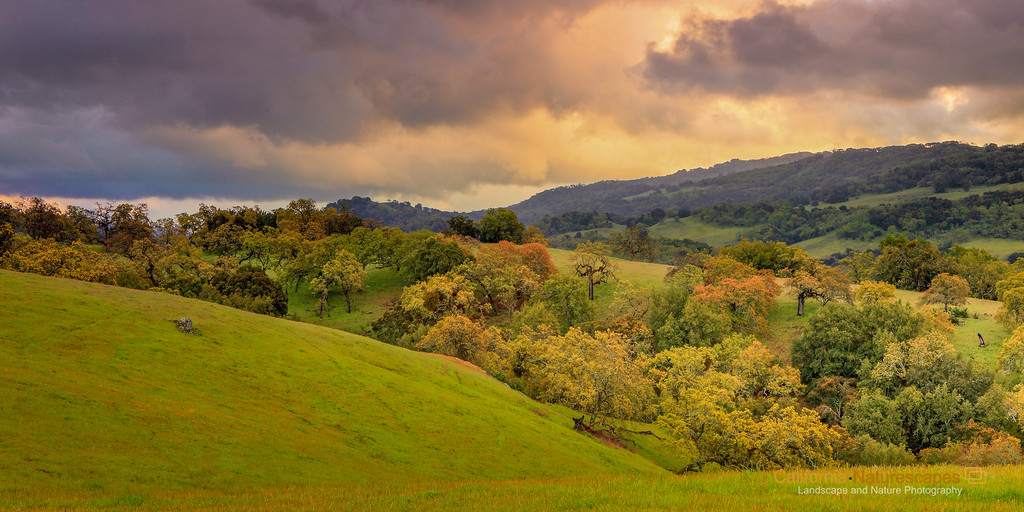"""Undulating hills and Oaks of California Landscape"" <br>Location: Joseph D Grant County Park, California. <br>GPS: <a href=""http://g.co/maps/hd2bj"">37°20'4"" N 121°41'56"" W</a>  <p><p>Just after the rains, when the colors were deep, air was fresh and clouds were dramatic I realized it would be difficult to catch this moment again. So I stopped and made this image by the <a href=""http://g.co/maps/hd2bj"">roadside</a>.  <p>Tech Info: <br>Lens: Canon EF 24-70 f/2.8L @50mm <br>Camera: Canon EOS 5D Mk II <br>Exposure: 0.5sec at f/13 and ISO 200 <br>Filters: LEE ND Grads to balance the light of the sky and foreground  <p>Note on processing: <br>I processed this image in Adobe Lightroom 4. These days I find myself using digital graduated filters a lot. I experiment with tonal changes, color contrasts and even color temperature changes to obtain a look of the image that resembles with how I remembered this place. But essentially the processing involved exposure balancing in all areas of the image, saturation changes, and local dodging and burning."
