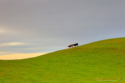 """Great Cheese Comes from Happy Cows, Happy Cows Come from California"" Location: Calaveras Hills, Milpitas, California.  Remember the ad, ""Great cheese comes from happy cows, happy cows come from California"". One foggy morning of spring at sunrise I came here to visit these happy cows. The visit went okay except for some weird calls and hand waiving I had to do to make these guys move into the frame. It was fun.  Tech Info: Lens: Canon EF 24-70 f/2.8L @ 70mm Camera: Canon EOS 5D Mk II Exposure: 1/30sec at f/13 and ISO 800 Filters: LEE ND Grad 0.9 soft edge"