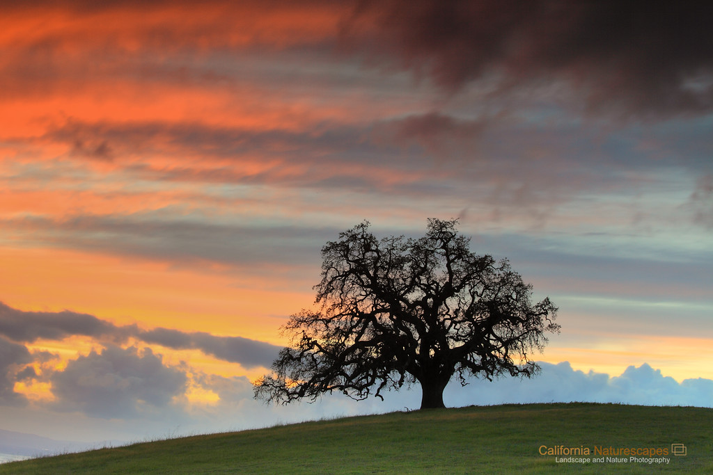 """California Oak""<br /> Location: South Bay Hills, San Jose, California.<br /> <br /> I have been on the look out for these lone oak trees for a long time. It is such a quintenssential California landscape that I had to capture. Surprisingly, I found this oak tree very close to where I live and since then I have been visiting here to capture it under best light.<br /> <br /> Spring is a unique and transient time for this landscape. The hills are lush green after winter rains but are about to turn golden in few weeks. Oak tree will sprout new leaves and will look entirely different. And the dramatic sunsets will be long gone. In that sense I really liked this image and was happy to have captured it.<br /> <br /> Tech Info:<br /> Lens: Canon EF 70-200 f/4L IS @ 70mm<br /> Camera: Canon EOS 5D MK II<br /> Exposure: 3.2sec at f/20 and ISO 200<br /> Filters: LEE ND Grads 0.6, 0.9 soft edge and Singh Ray 3 stop reverse ND Grad stacked together"