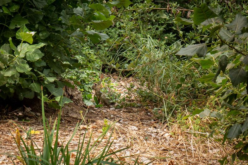 Rabbit hiding in the undergrowth