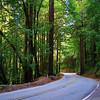 Highway 9, Henry Cowell Redwoods State Park - Felton, California