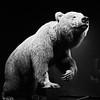 California Bear, Natural History Museum - Los Angeles, California