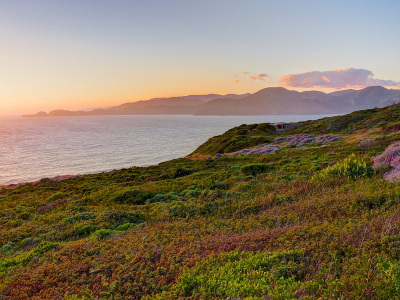 Wildflowers and the Bay at Sunset - San Francisco, California