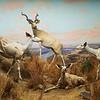 Wildlife Diorama, Natural History Museum - Los Angeles, California