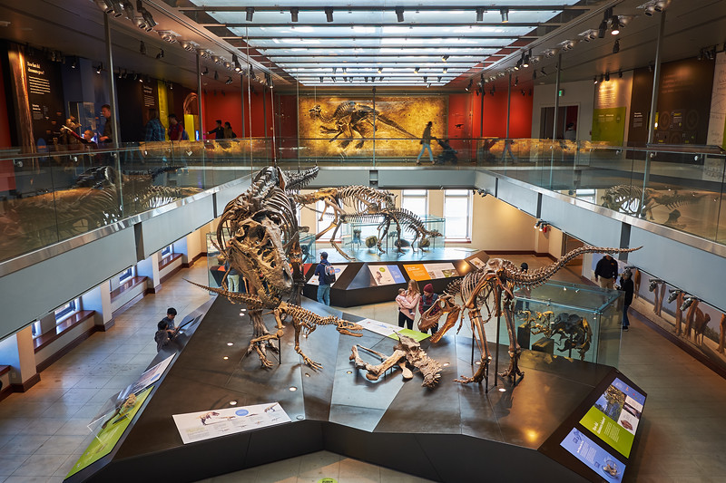 Fossils and Architecture, Natural History Museum - Los Angeles, California