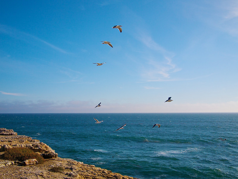Flying in Formation, Wilder Ranch State Park - Santa Cruz, California