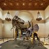 Posing Dinosaurs, Natural History Museum - Los Angeles, California