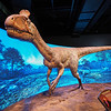 Dinosaur Portrait, Natural History Museum - Los Angeles, California
