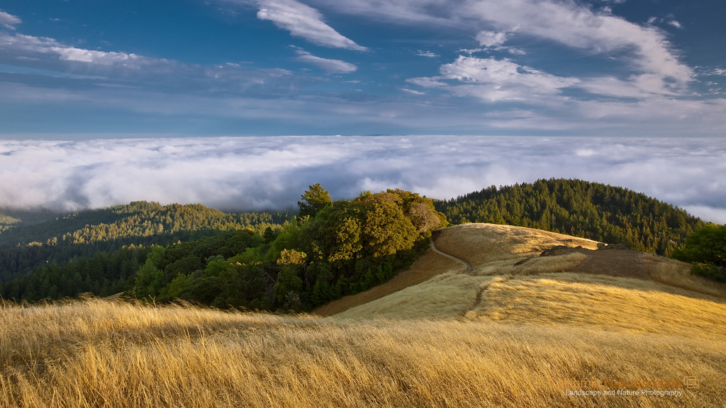 """California's Gold"" Location: Mt Tamalpais, Mill Valley, California.  Golden grass on undulating hills is a characteristic California landscape. Up here it is dry but at lower elevation fog is abundant and brings in enough moisture so giant redwoods can grow. There has been extensive logging in this area which took away acres of redwood forests but many still survive such as Muir woods seen in this image.  Tech Info and Tip: Lens: Canon 17-40mm f/4L @26mm Camera: Canon 5D Mk II Exposure: 0.2sec at f11 and ISO 50 Filters: SinghRay 2 stop hard edge ND grad  Hiking on these trails can take you all the way from top of Mt. Tamalpais to the ocean floor at Stinson Beach. I highly recommend this hike for spectacular views and good exercise coming back up. Remember going down is optional but coming back is compulsory. <br><br>San Francisco is a busy metropolitan area but just a few miles to the north exists a place so quiet and unique that it is such a perfect escape from the chaos of the city life. Mt. Tam, as it is locally know, is a perfect vantage point to watch the summer fog rolling into the bay or just enjoy the hike on its undulating hills and redwood forests."