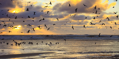 """Winter Gathering"" Location: San Gregorio State Beach, San Mateo County, California.  One Sunday on a California winter evening I headed back to San Gregorio beach and was greeted with seagulls who were gathered in large number almost as if there was some kind of gathering going on. I have been here many times so I know these guys like to find food in the stream that flows into this beach. Most of the time when I have tried to get too close the flock they just fly away. This weekend, however,  there was a stream separating myself from the gulls which I did not want to cross and they seemed happy about the fact that I was not venturing too close to them.  So I setup my gear and waited for some nice cloud activity in the background. As the clouds were breaking off I decided to capture the moment when the seagulls were dispersed in air. With these gulls in flight I felt it added bit more dynamic element to the image. The light beams in the background are my favorite things to photograph and a cloud activity that is not too dense and not too sparse makes for the best conditions for that to happen.   Tech Info and Tip: Lens: Canon EF 70-200 f/4L IS @70mm Camera: Canon EOS 5D Mk II Exposure: 1/60sec at f/8 and ISO 400 Filters: LEE .9 soft edge and .75 hard edge ND grads stacked together (This is a 1x2 crop from original image)"