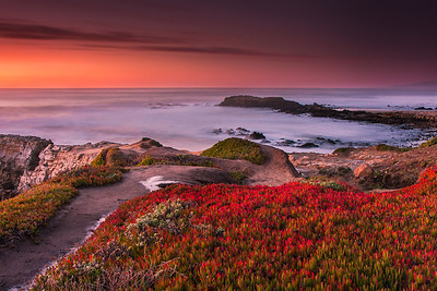 I lost my way while driving and by the time arrived here, sun had set ! It was getting dark and there wasn't time to climb down to the rocks. I noticed that the ice plants had become vibrant after heavy rains in December. There was a whole patch of red and I thought of experimenting with them in the foreground. Used .9 Graduated neutral density LEE filter (hard edge) to suppress the highlights in the sky and exposed this shot for full 25 secs. The result was well exposed foreground and frozen ocean!! It was dark by the time I left this place.