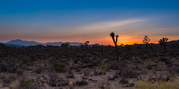 Sunset, at Joshua Tree National Park, California