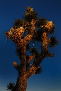 Sunset, at Joshua Tree National Park, California