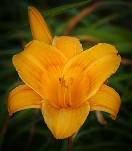 06815 Shelter Island Flowers