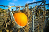 A pumpkin is being grown on a fence by the bay in Oakland, California<br /> 2013 ©MegSeidel