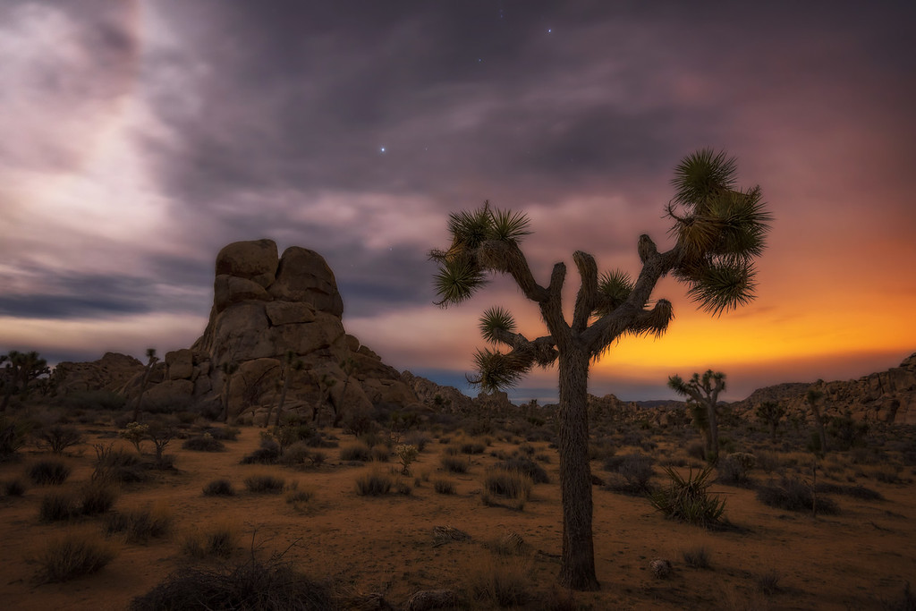 Joshua Tree under a Full Moon