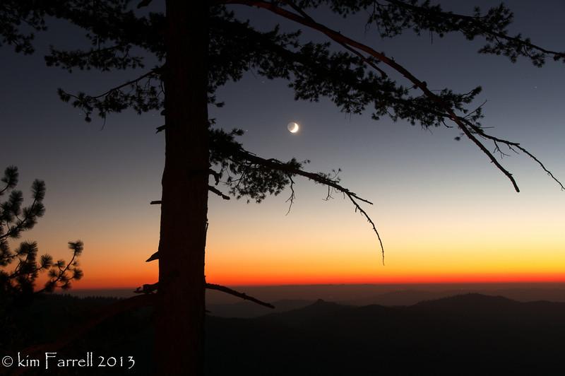 Sunset, pine and crescent moon.  Yosemite National Park.