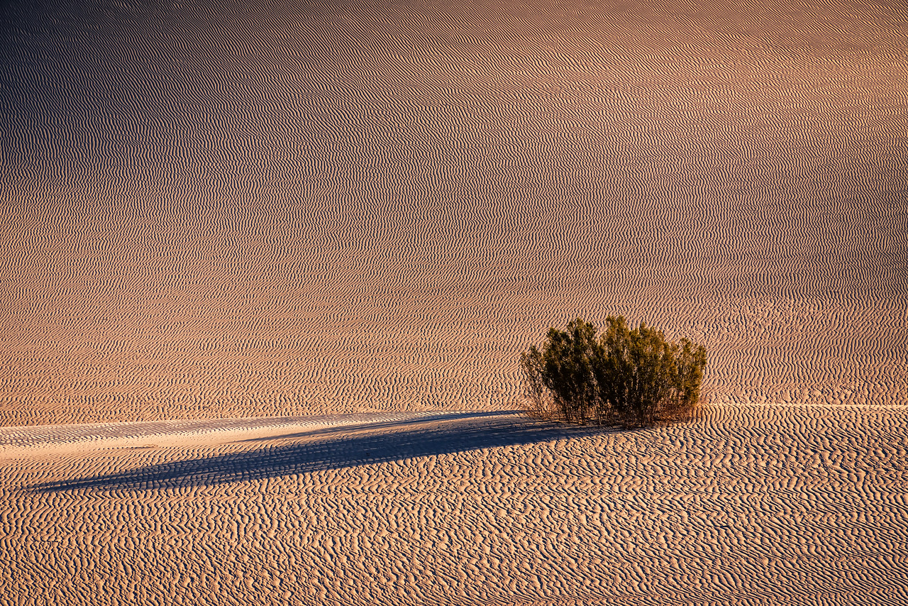 Isolation at Mesquite Dunes (Death Valley National Park)