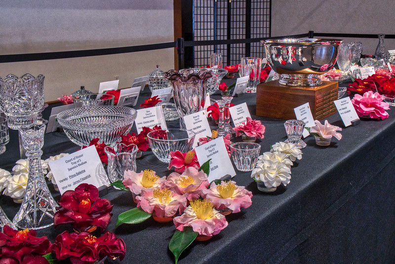 The head table at the Spring Camellia Show at Descanso Gardens