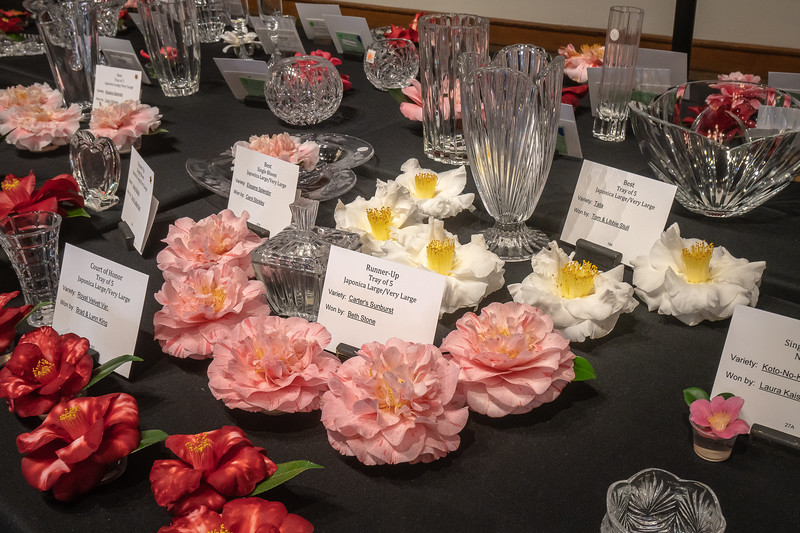 Detail of the head table at the Spring Camellia Show