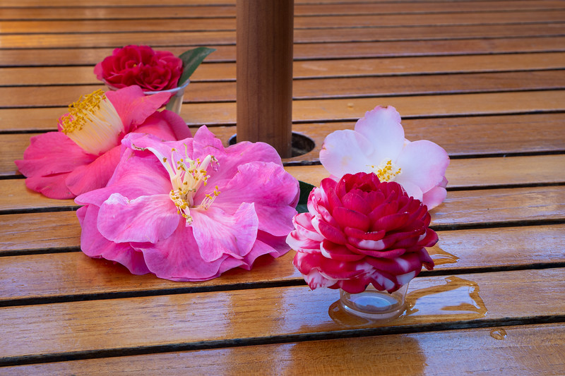 Descanso Gardens table decorated with camellias